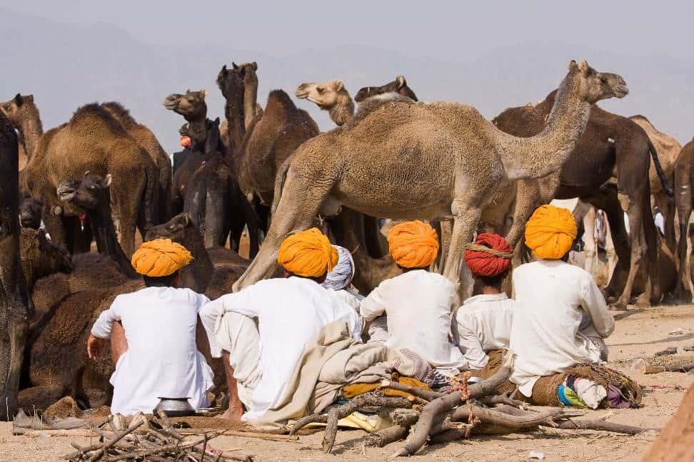 Sahara Dairy Co Camel Milk Benefits